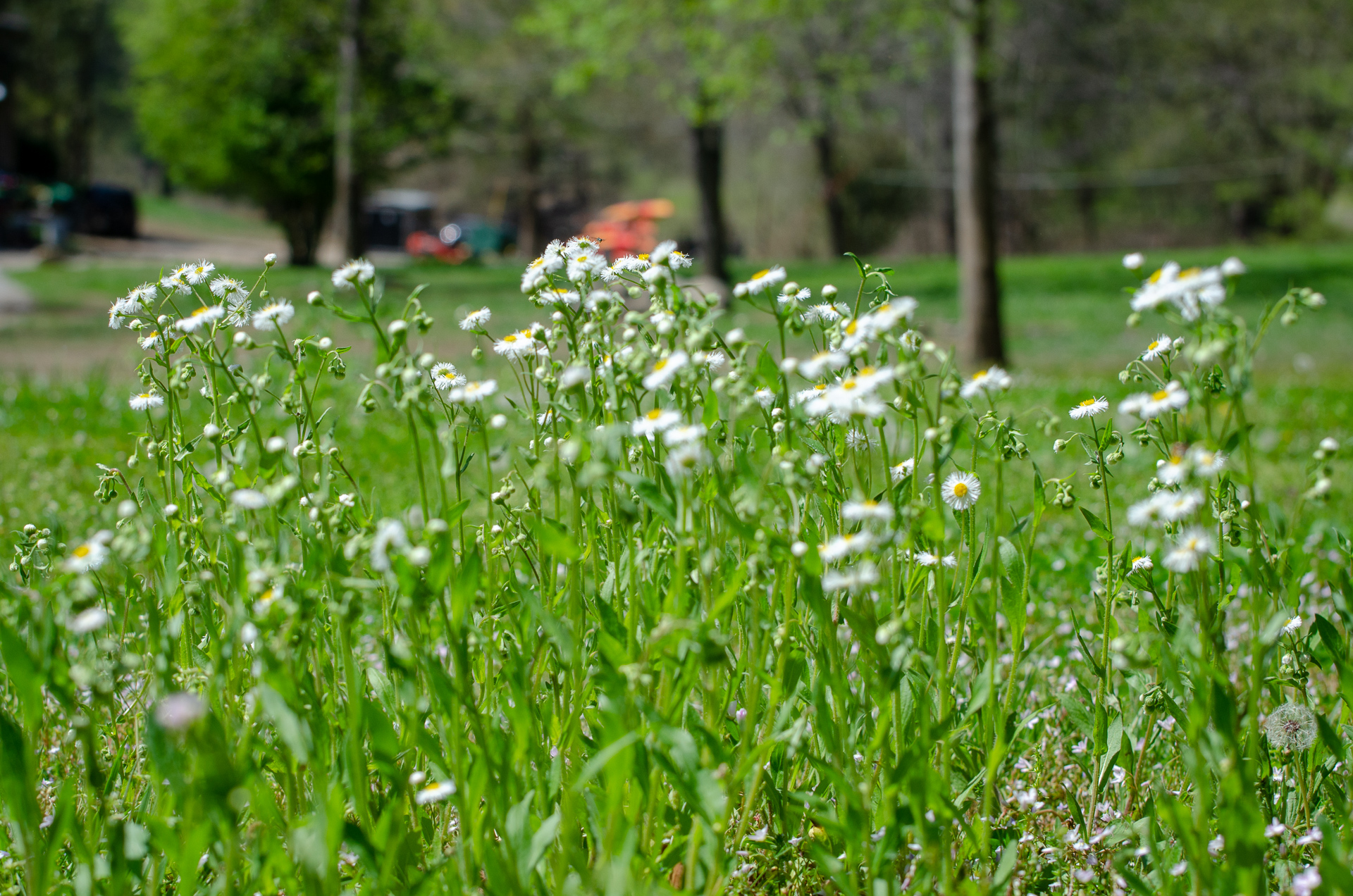 20190410_Marina_Wildflowers_1285.jpg