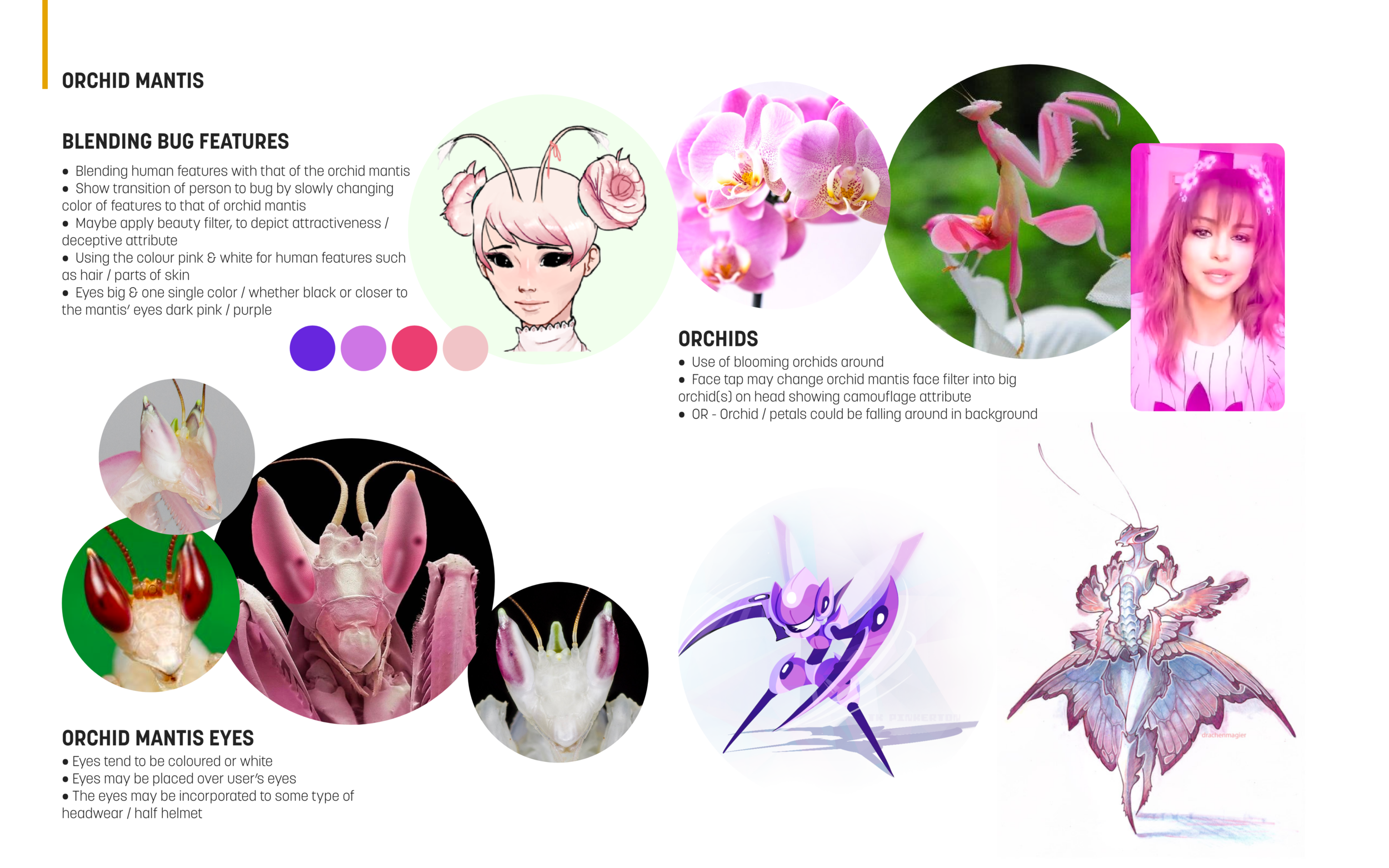 Orchid Mantis.png