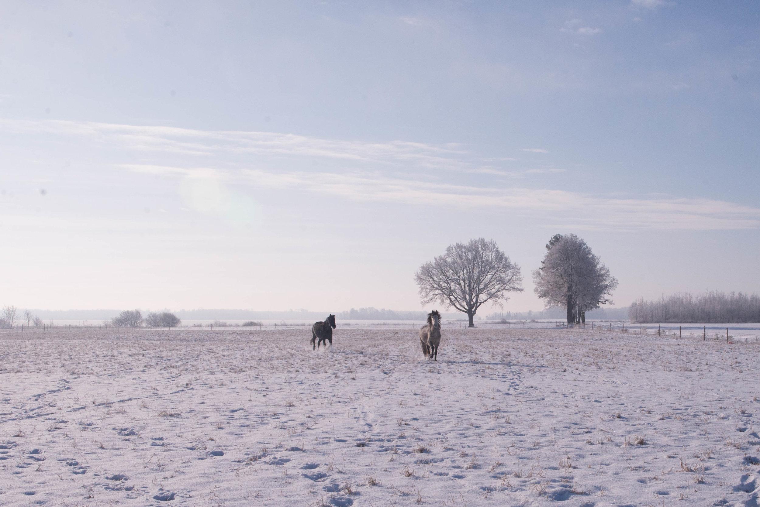 winterhorses2018-1-45.jpg