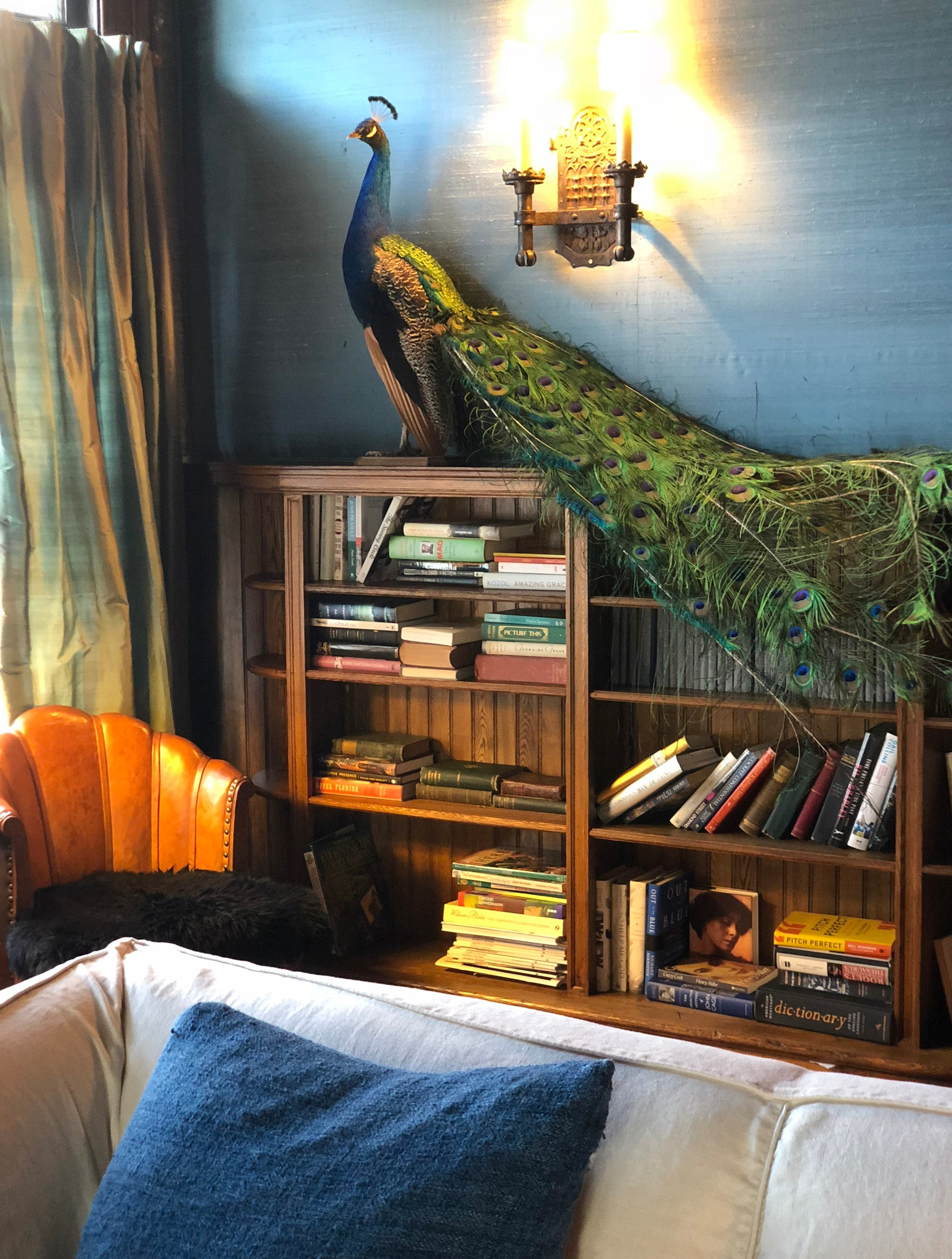 There's a little eclectic vibe going on at the Tiger House. This peacock welcomes visitors to relax in the library and page through the numerous Hudson history books.