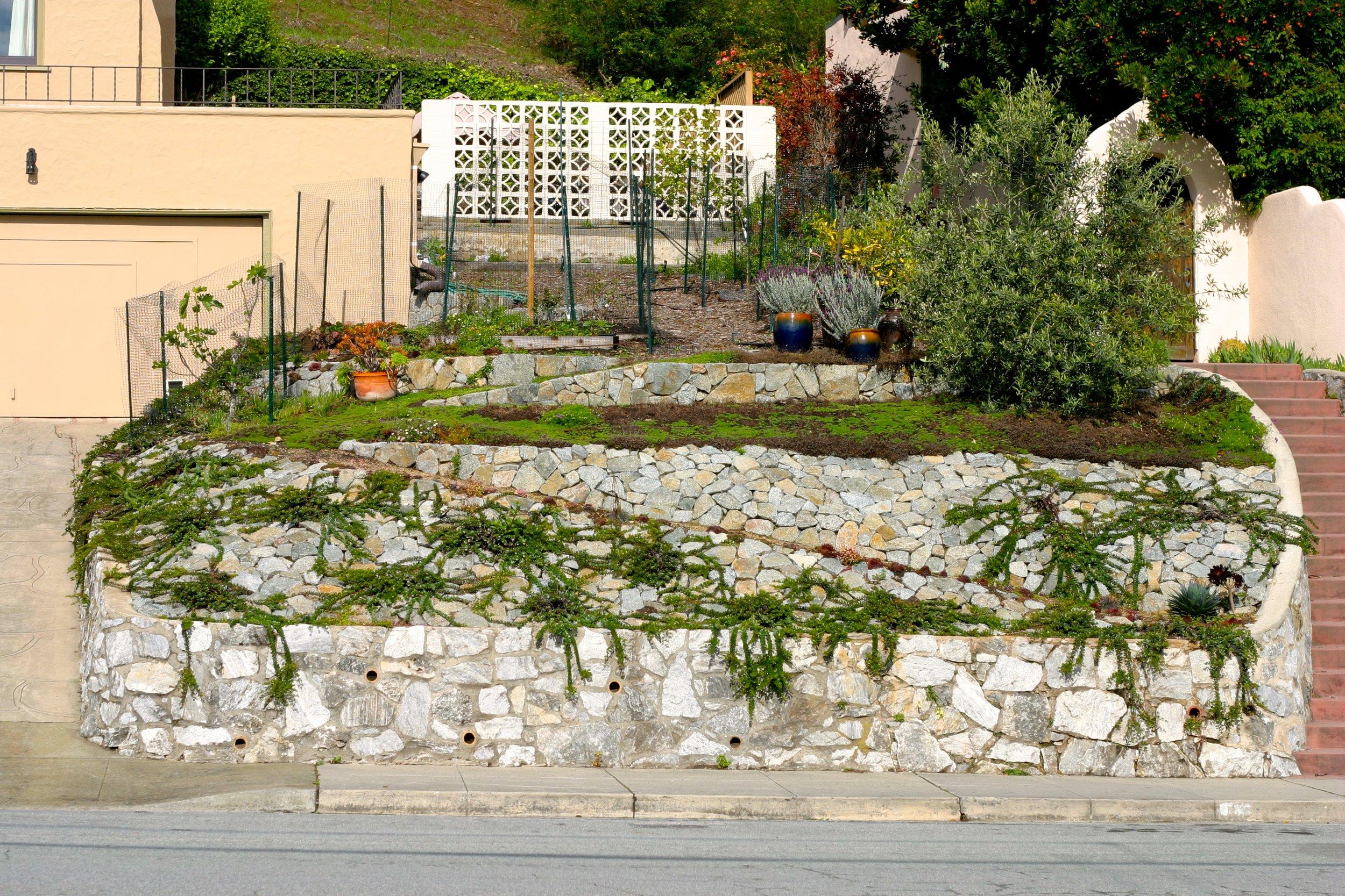 Garden Escalona 1.jpg