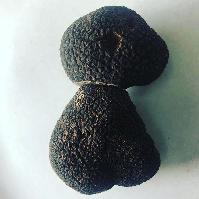 New season local truffles at our doorstep ... just sniffed out this week #tuber melanosporum #blue mountains #kanimblavalleytruffles