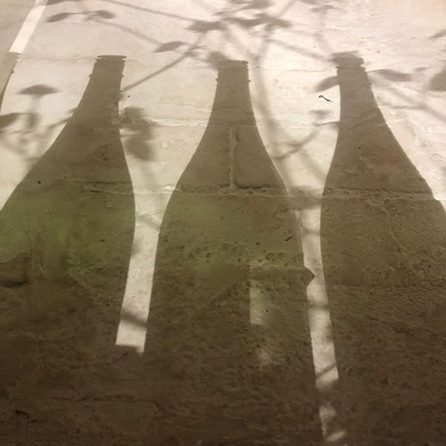 Sake + shadow + blossoms @ Fumo
