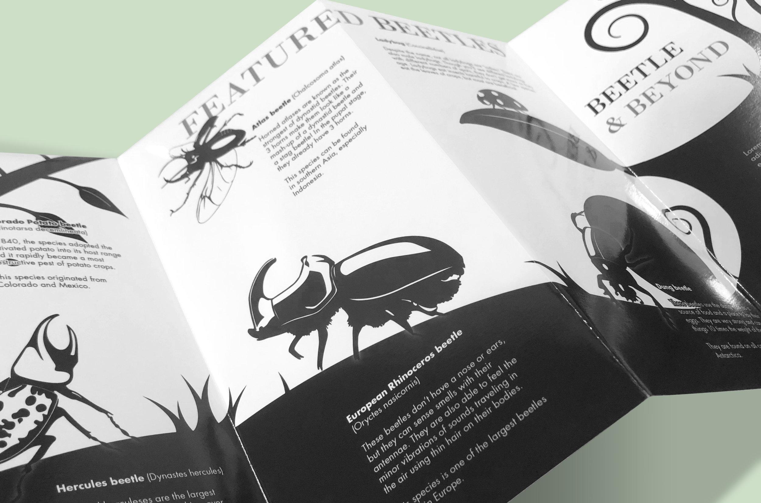 Beetle-Pamphlet-2.jpg