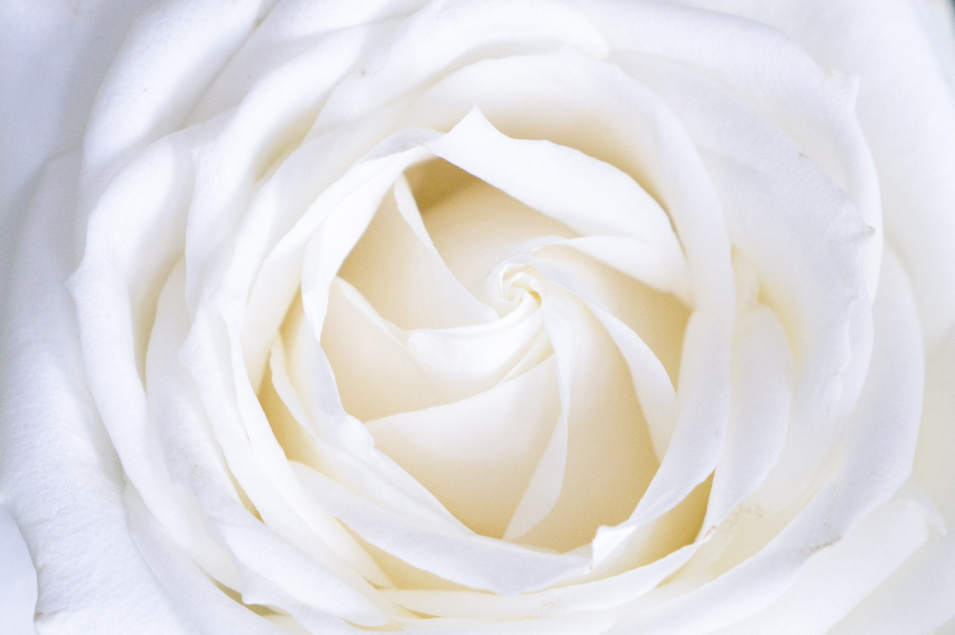 blossoming.jpg