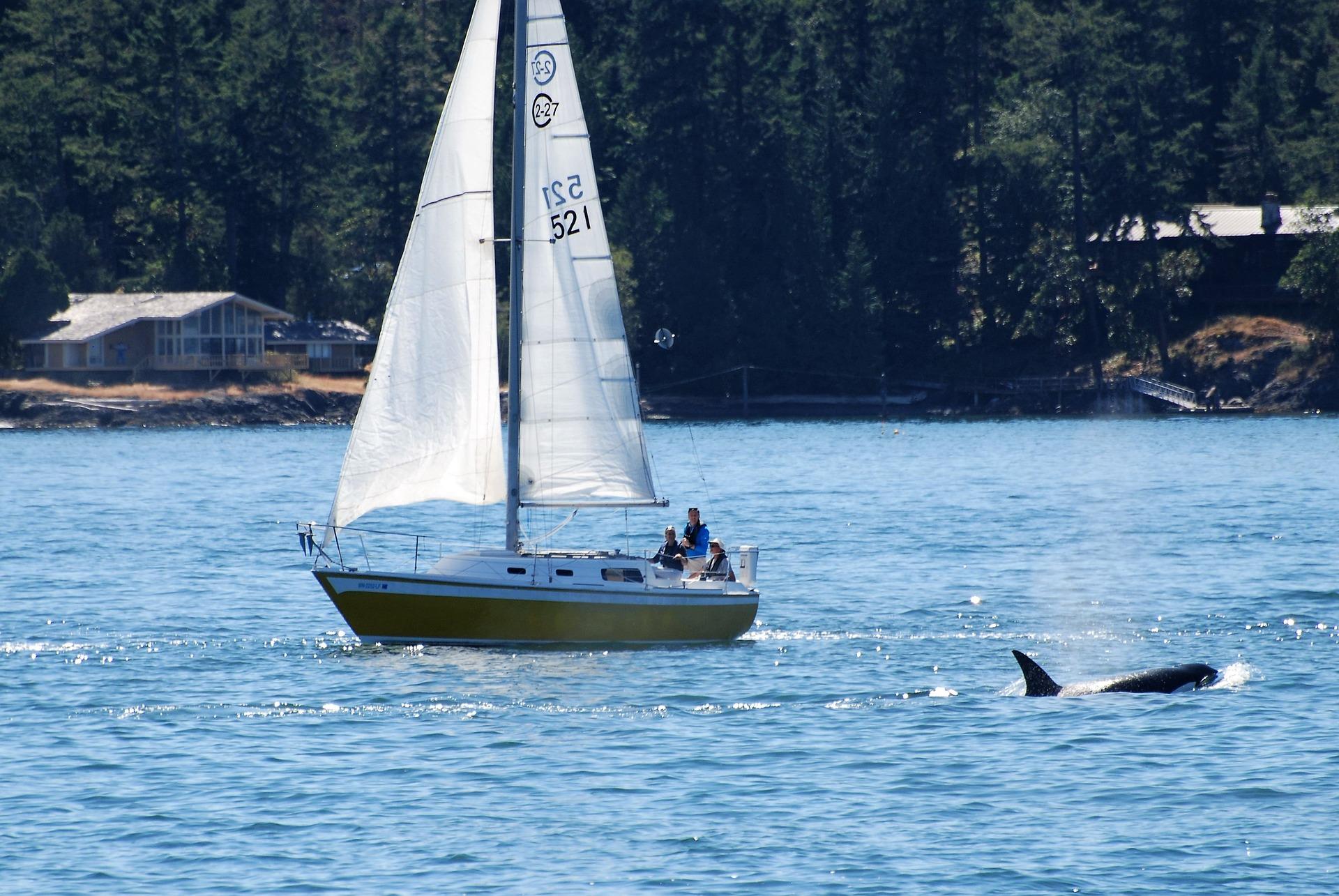 sailing-boat-3592517_1920.jpg
