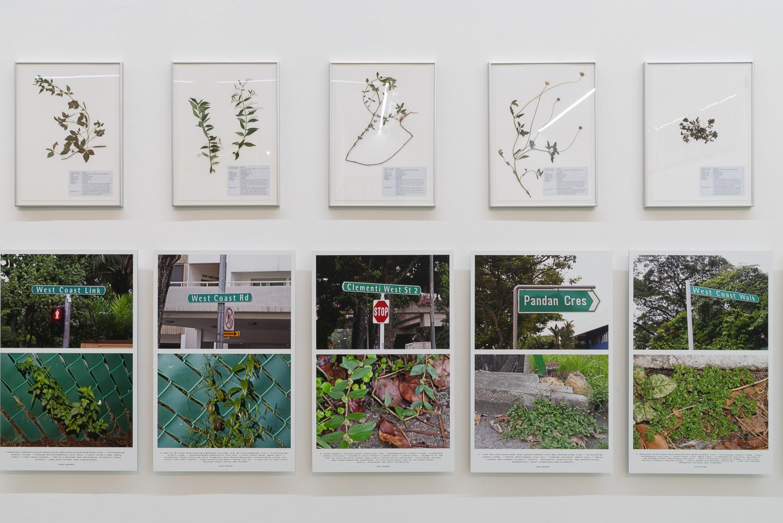 Jef Geys, 'Quadra Medicinale Singapore', Singapore chapter installation view. Image courtesy of NTU CCA Singapore.