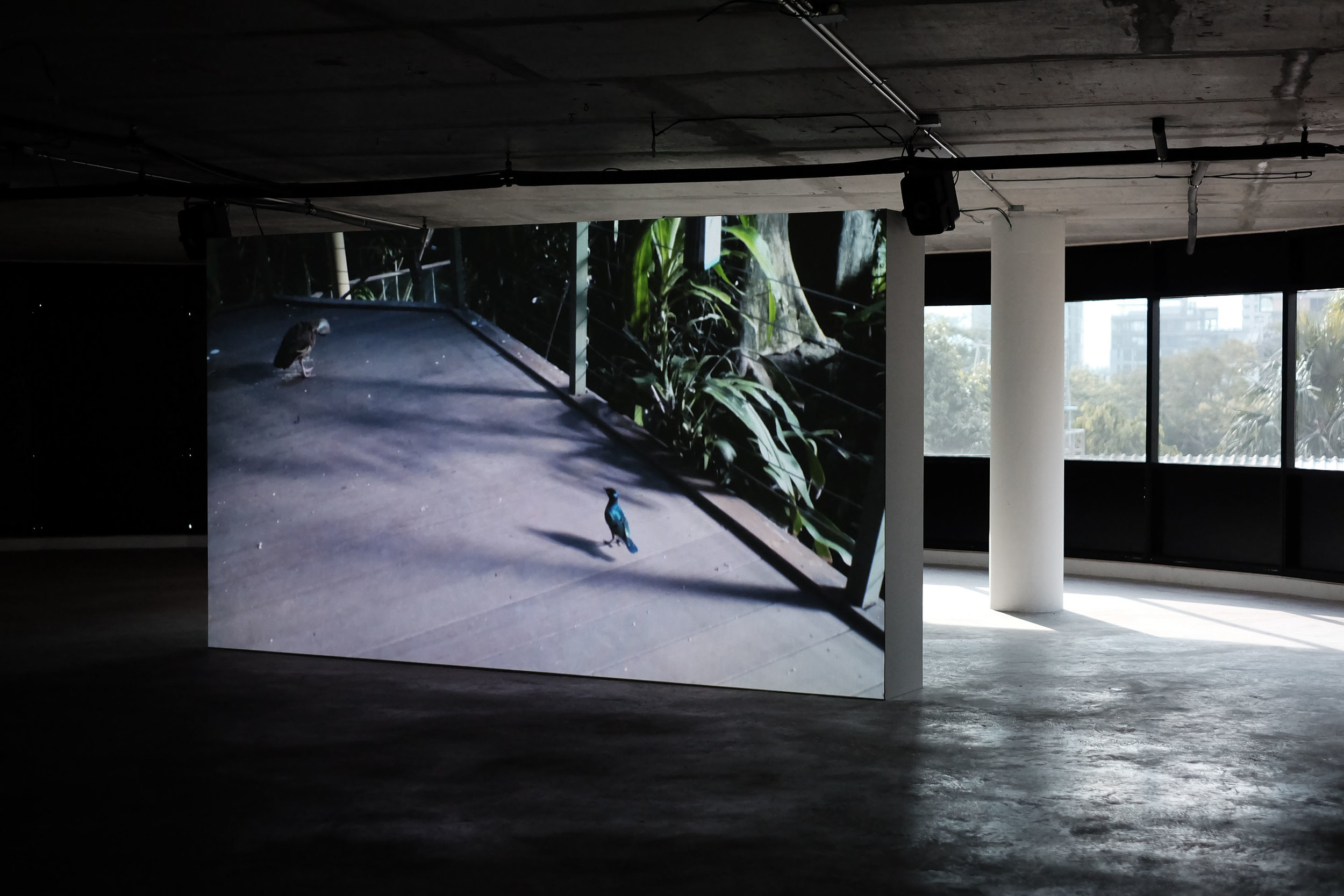 Installation view of Rachel Rose's video installation 'SITTING FEEDING SLEEPING' (2013), presented as part of Ghost:2561 at Nova Project Space. Image courtesy of the artist and Nova Contemporary.