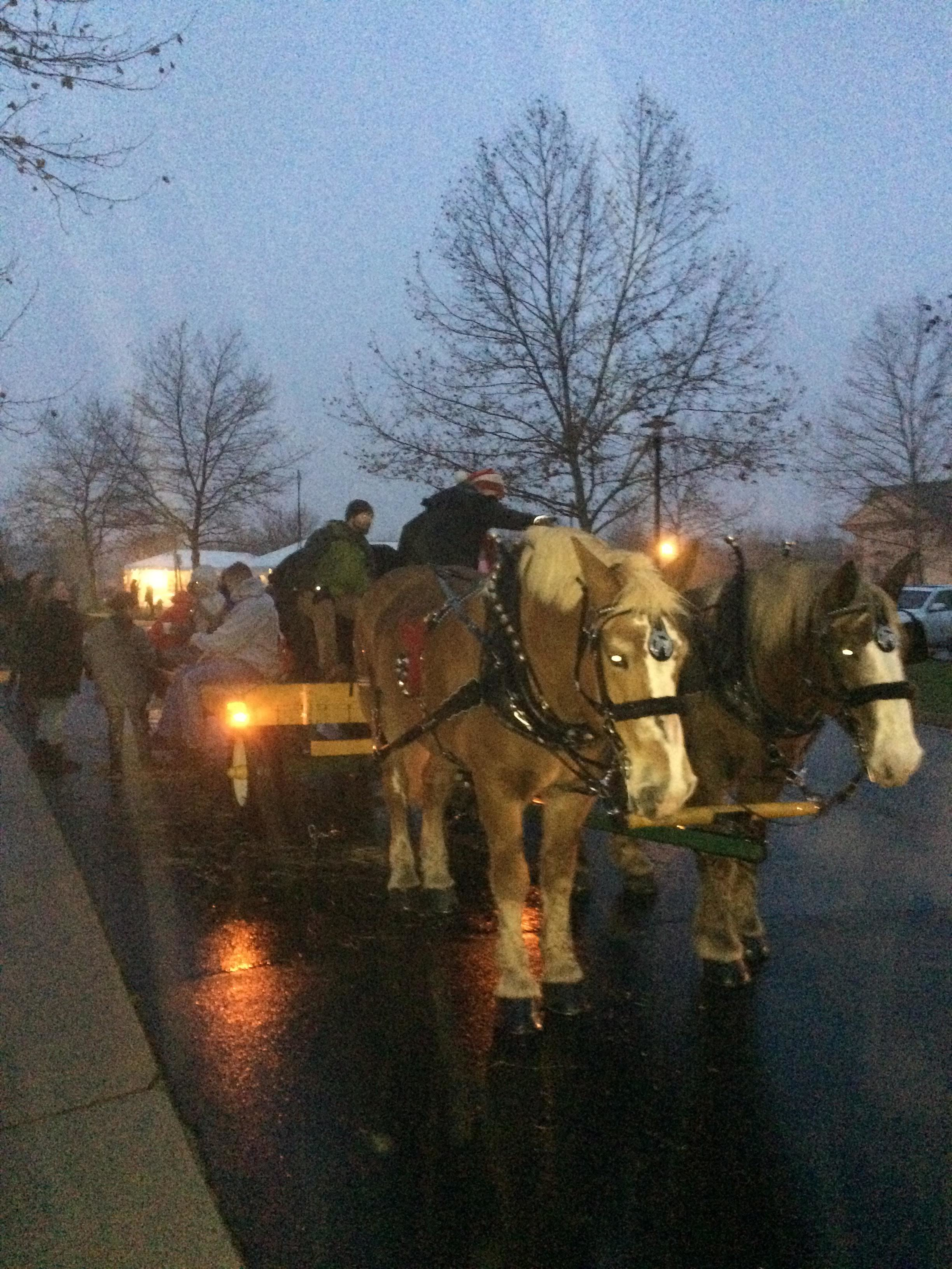 - Horse drawn carriage rides