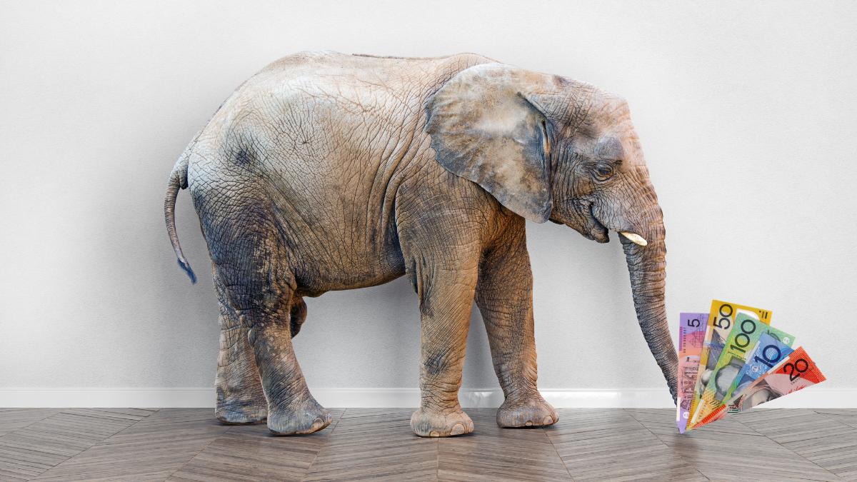 Elephant Like Money