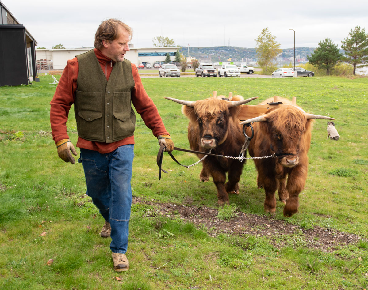 oxen-5.jpg
