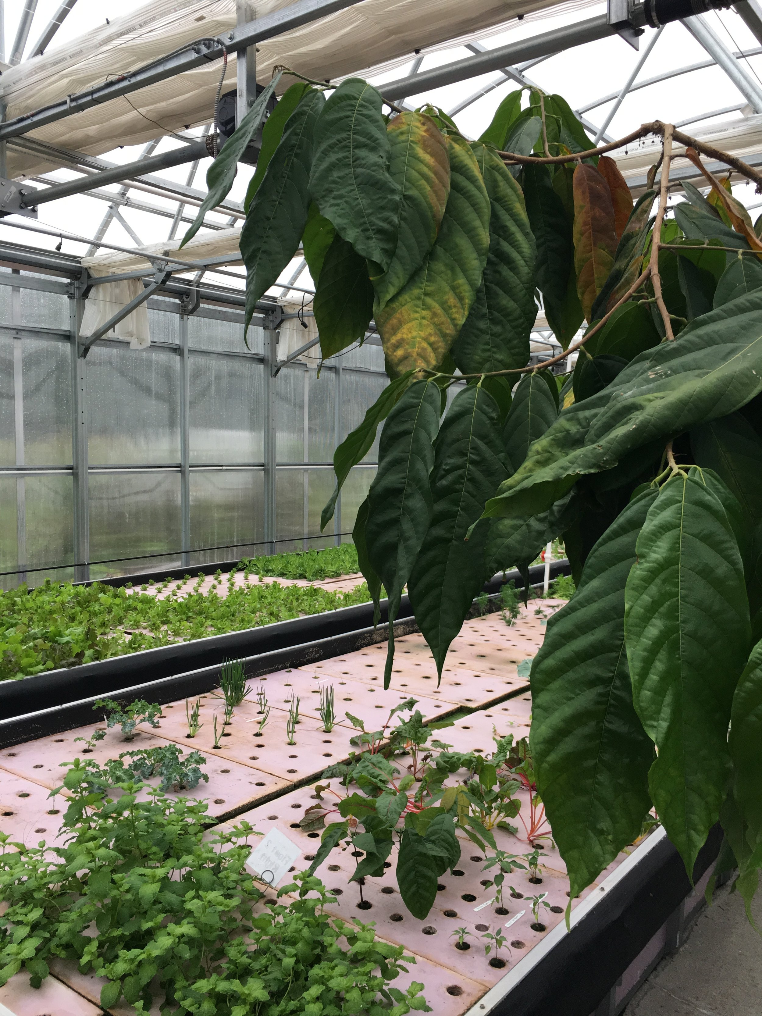 Harrisburg University, Harrisburg PA - We learned about a great aquaponics program bridging high school and college level learning . This grant helped assist in the new laboratory location set up of an Intag aquaponics, and the creation of 100 level curriculum.
