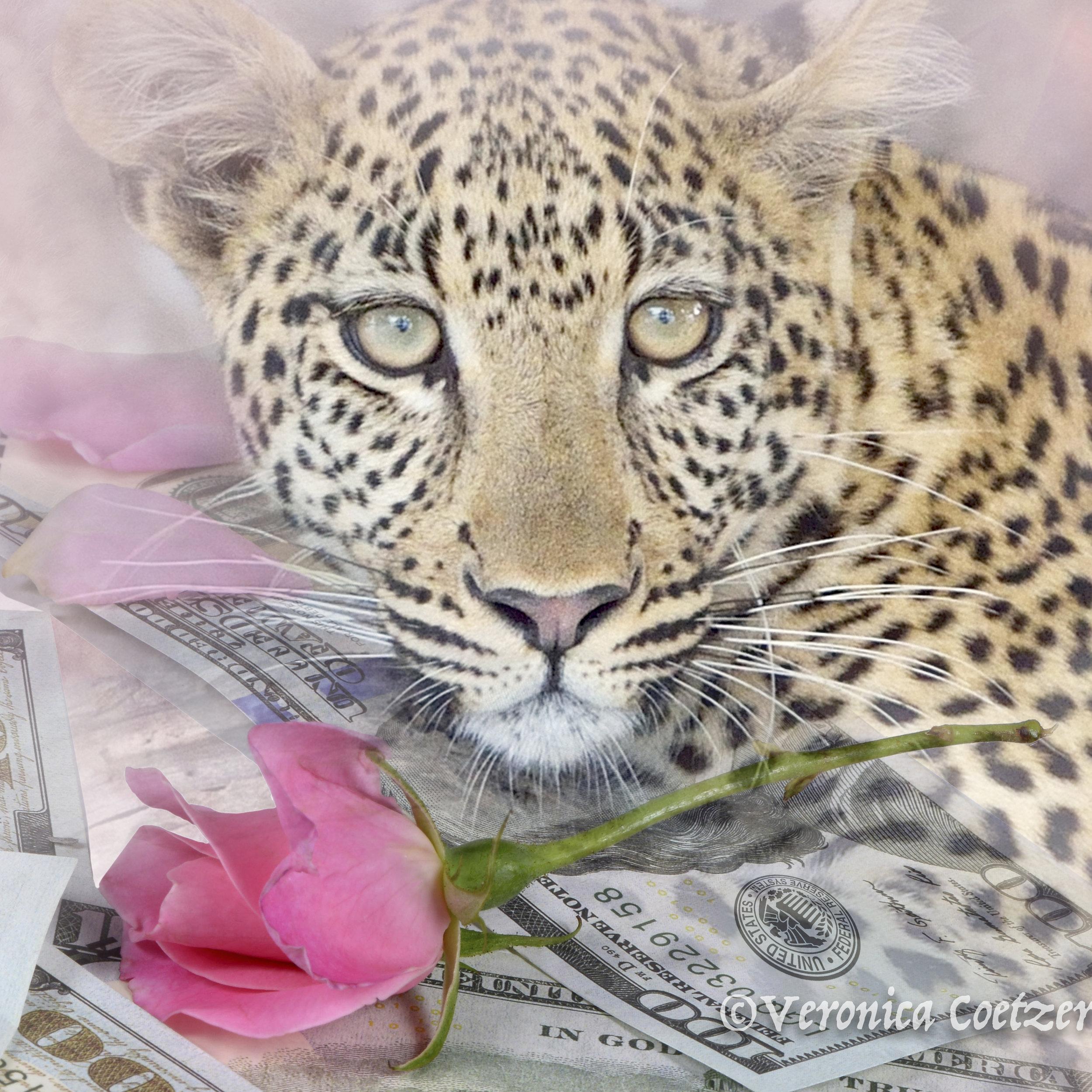 Leopard rose 2d.jpg