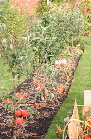 Creating A Vegetable Garden With Notes On Spring Planting With