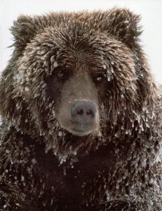 bear cut.jpg