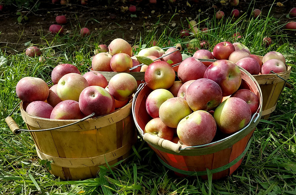 Michigan-apples.jpg