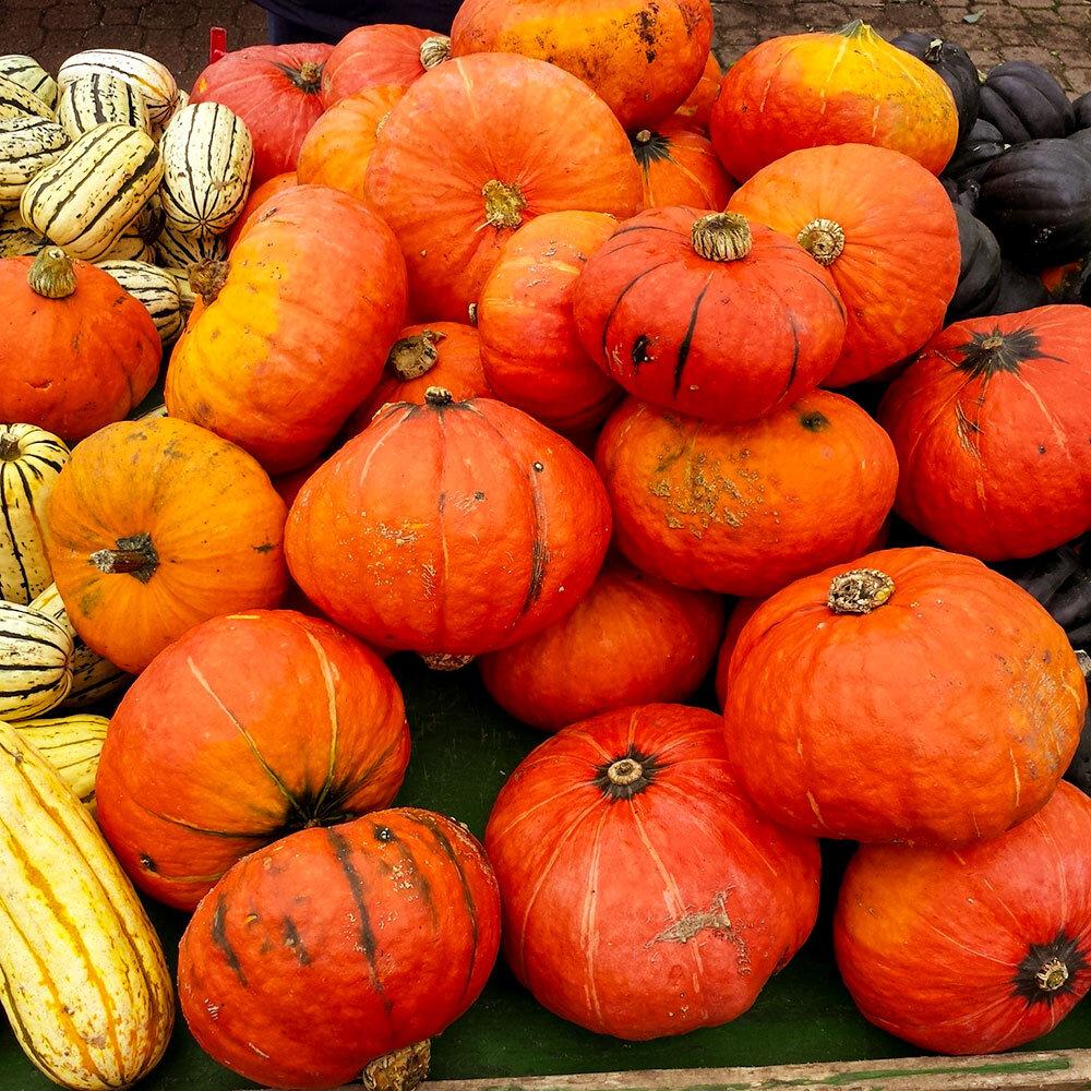 fall-pumpkins.jpg