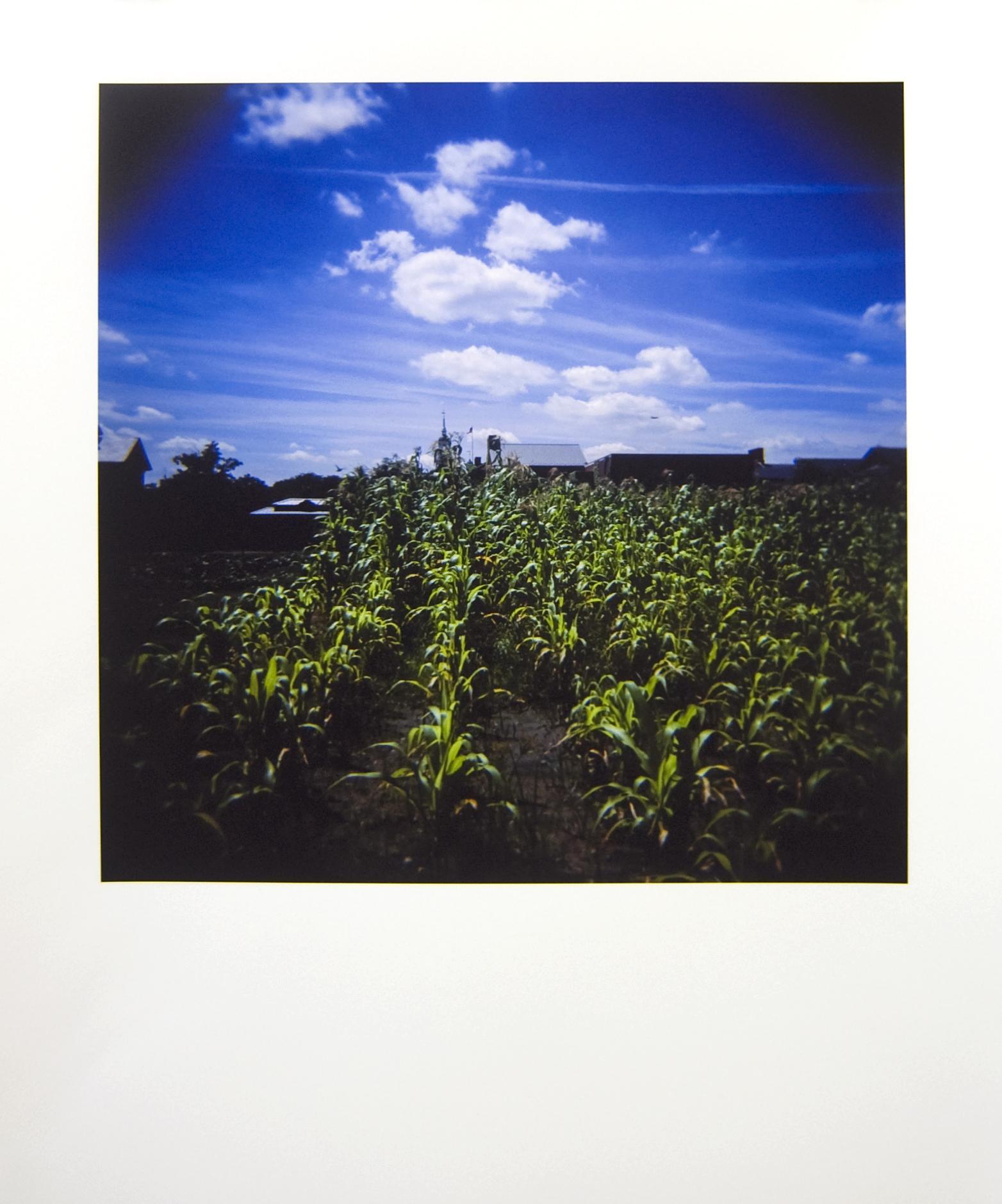Corn Field, Greenfield Village  2013–14 Archival fine art print from 120mm slide 16.1 x 13.4 in