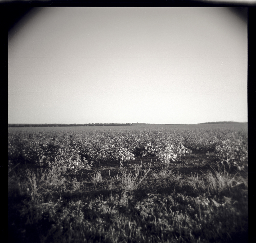 Cotton Fields, Plains, Georgia Gelatin silver print, 5 x 5 in From the book 13 Presidents Published by  Slimvolume  (2016)