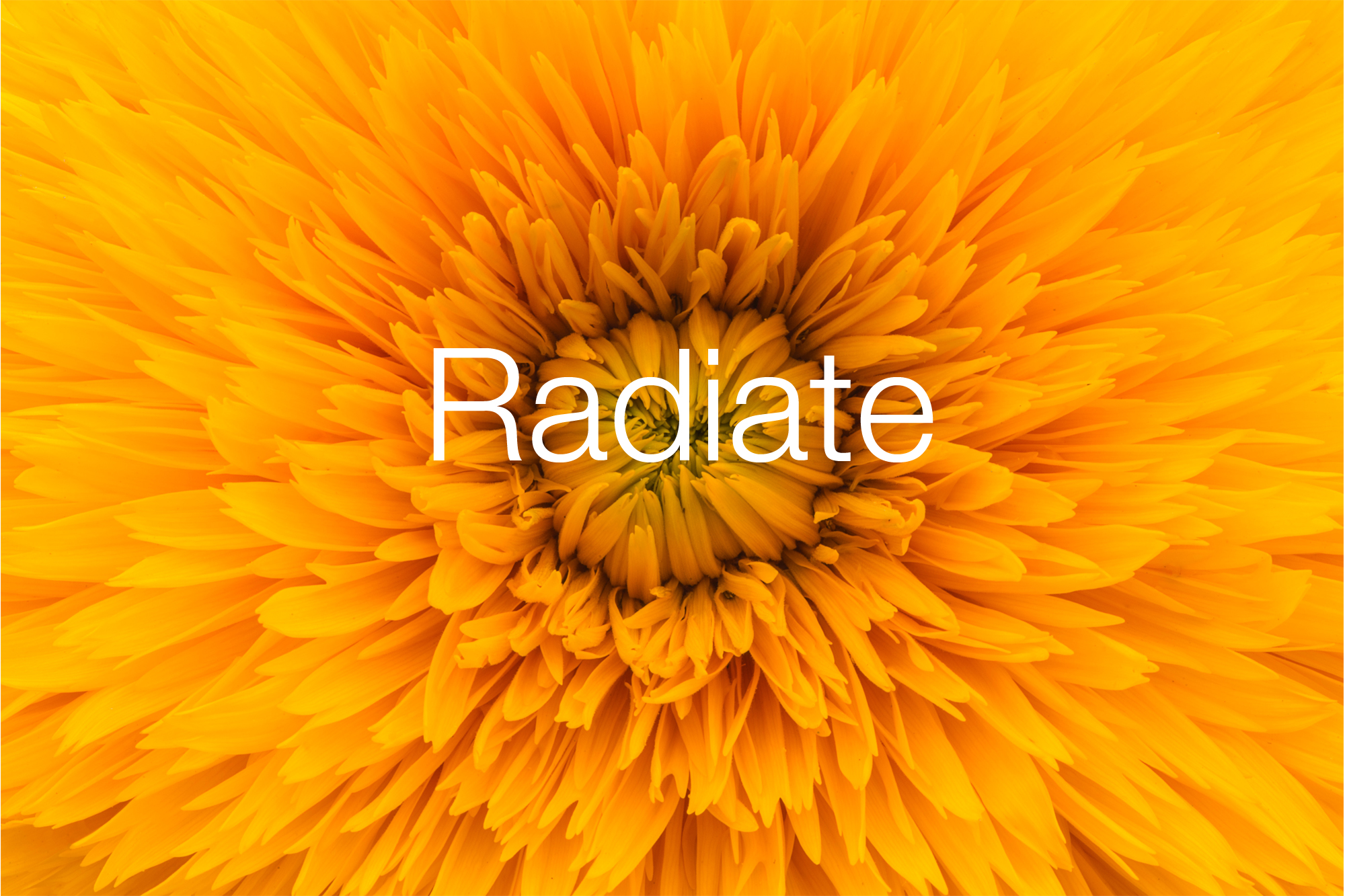 Radiate-Orange-Flower-website.jpg