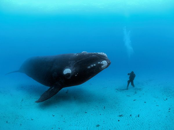 southern-right-whale-ocean-soul-skerry_43469_600x450.jpg
