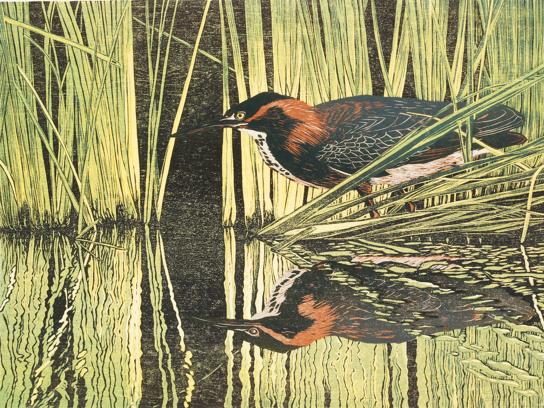 Andrea Rich,  Green Heron , 1996. Woodblock print.