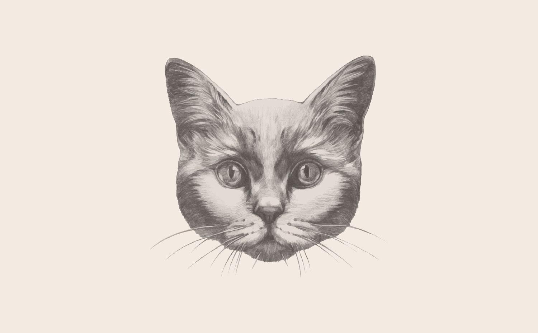 offleashed_cat.jpg
