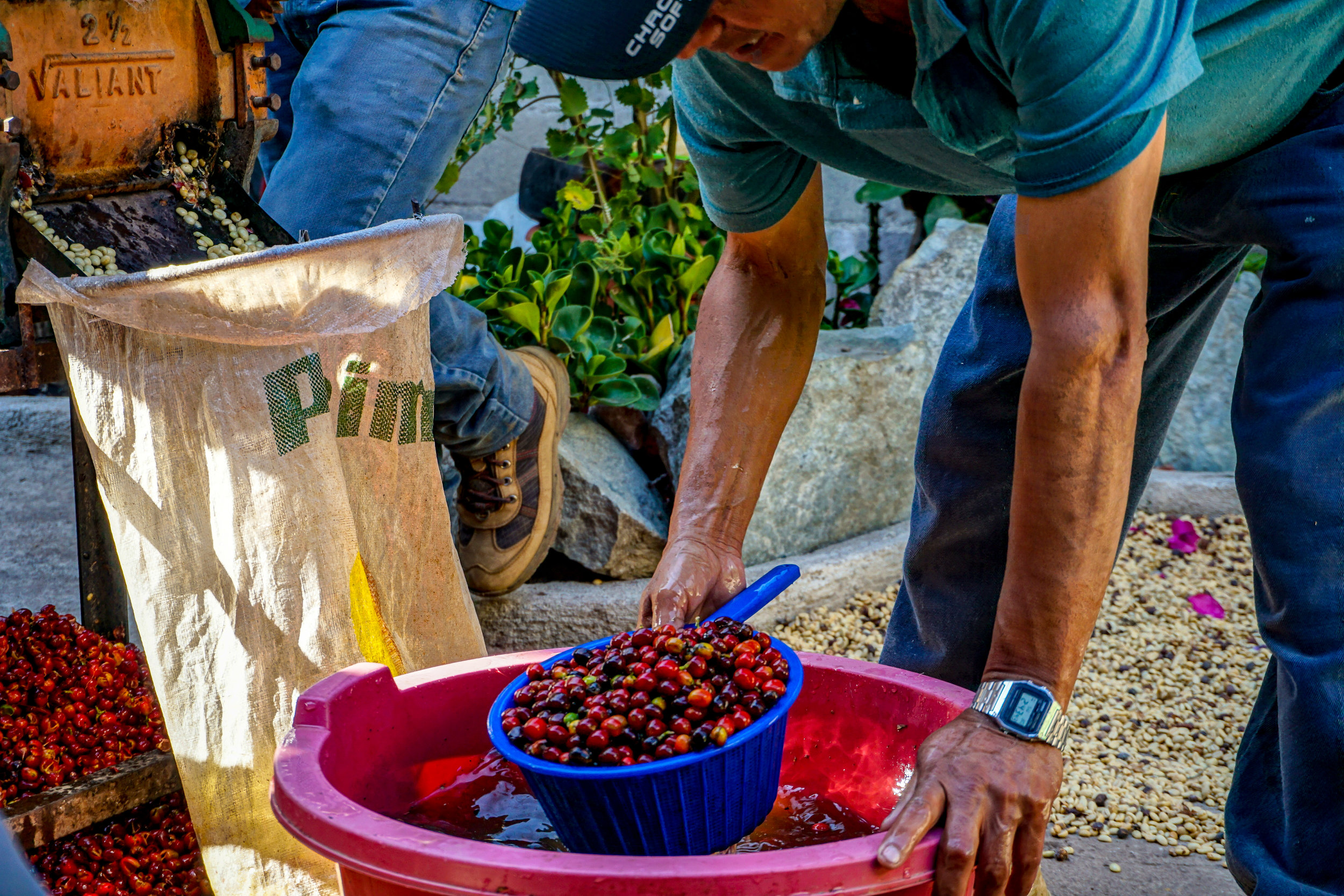 "#2 - Market access & Fair Wages - ""Why do we pay our partners in Guatemala over twice the local market rate for their coffee? Because it is the fair price to pay…""(continue reading ➝)"