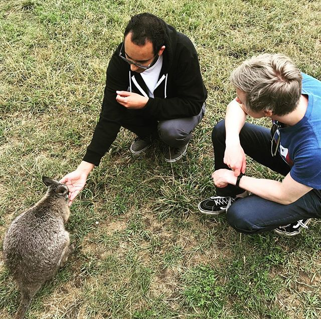 Recently had a chance to hangout with some baby wallabies!! • • • • • #kangaroo #queensland #joey #koala #wallabies #australianwildlife #wildliferescue #adventure #moonlitsanctuary #wallabiesofinstagram #wildlifeconservation #kangaroocreekfarm #bunyamountains #tasmanianwildlife #londonzoo #marsupials #wallaby #wallabyink #wallabys #wallabyranch #rockwallaby #wallabyscreek #wallabyprofessionalink #wallabyyogurt #421mediahouse #squatchsquad #sasquatch