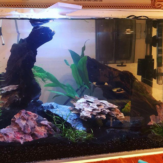 New 10 gallon in progress. • • • • #betta #bettas #bettafish #bettatank #bettasorority #bettasplendens #bettasofinstagram #bettacontest #fishtanks #fishkeeping #bettaaddict #fishofinstagram #instafish #cupang #bettaholic #plantedtank #planted #aquascape #aquarium #bettausa #tropical #bettacommunity #wildbetta #fishcommunity #freshwaterfish #421 #diyfish #421mediahouse #raspberrypi