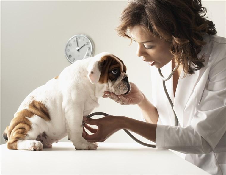 stock-dog-vet-today-180120-inline-01_4a141657c70a5c52ca1c954d799bd5d3.fit-760w.jpg