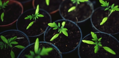Changing how seedlings grow -