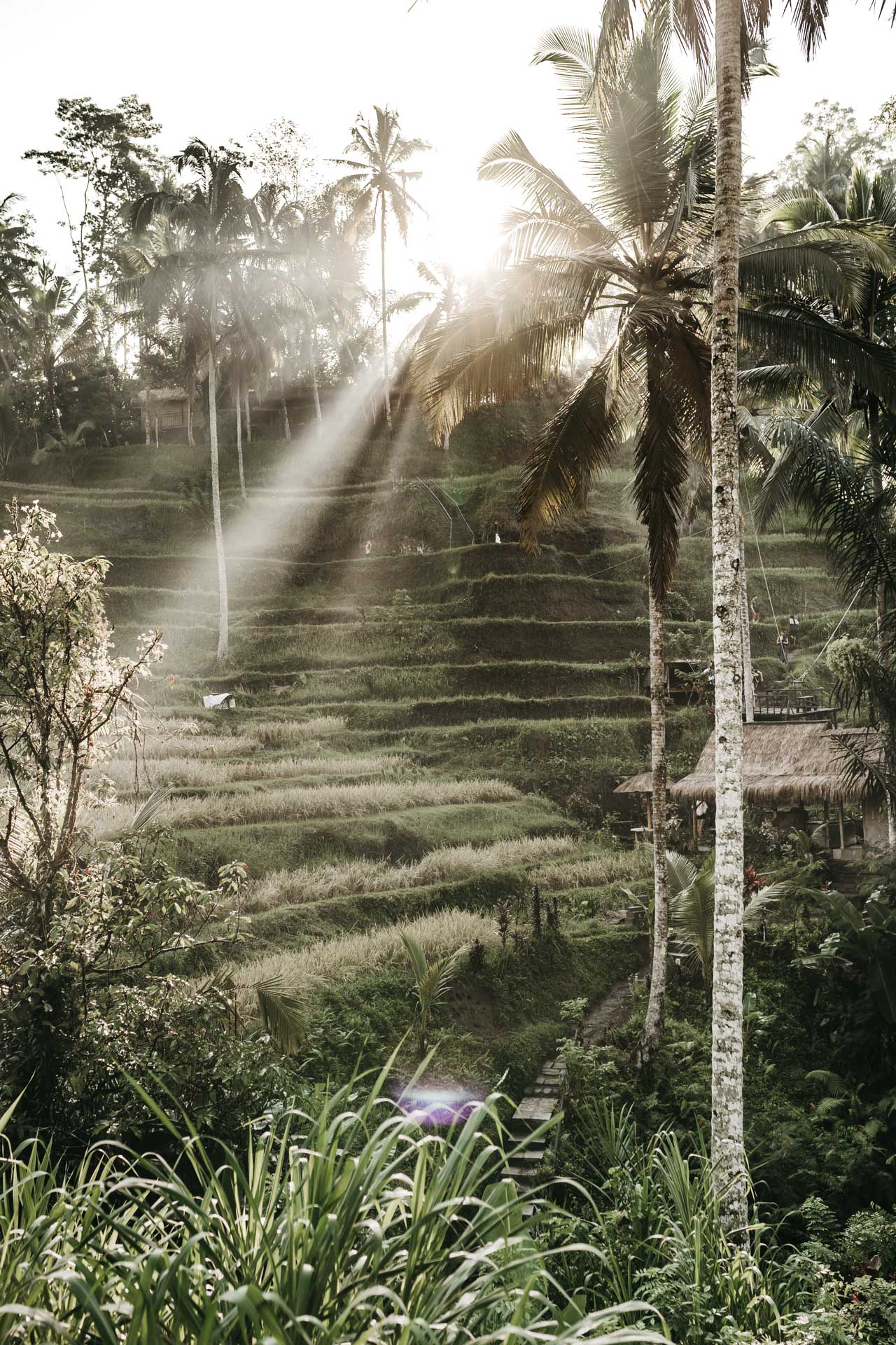 keira-mason-nordic-retreats-ubud-palm-trees.jpg