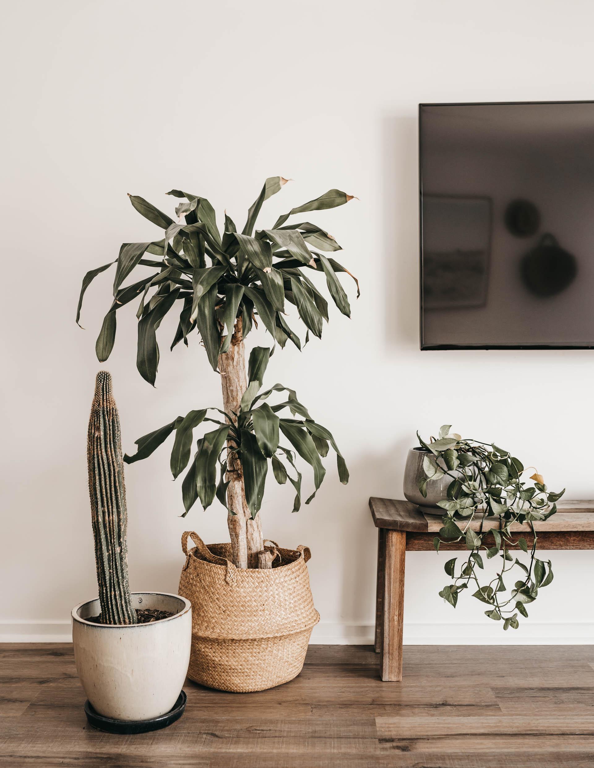 keira-mason-caba-cottage-plants-home.jpg