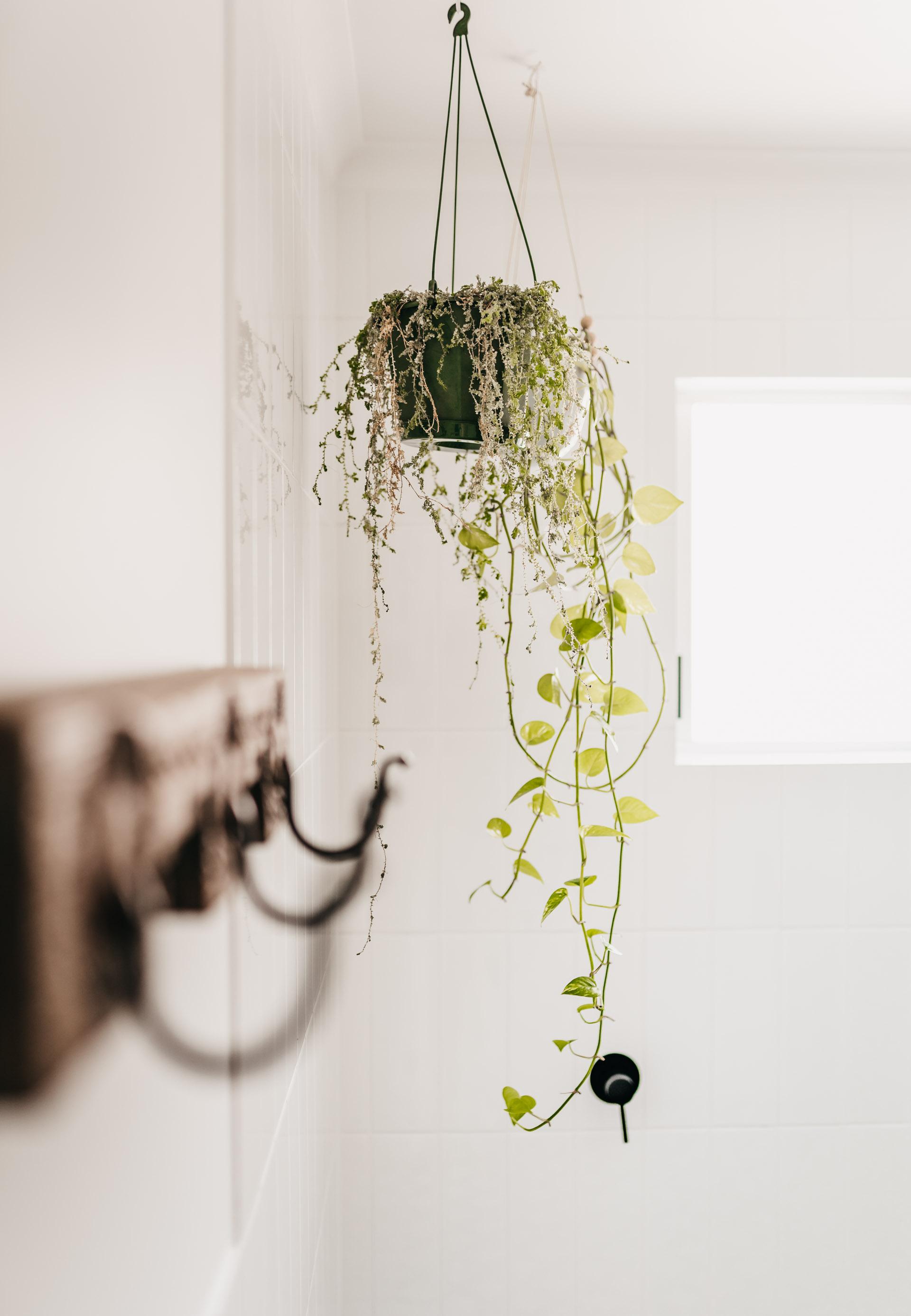 keira-mason-caba-cottage-bathroom-plants-details.jpg
