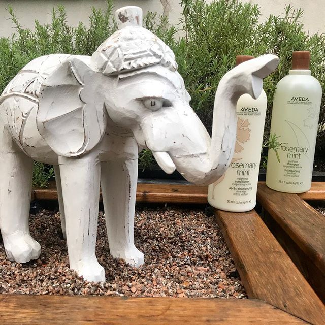 It's a miserable day.. why not book an appointment to make your hair happy and put a smile back on your face! Few appointments left for today, book online or call us to book now 029 20464611  #aveda #avedauk #avedacolour #sandshairdressing #waterloogardens #roath #rosemarymint #avedarosemarymint