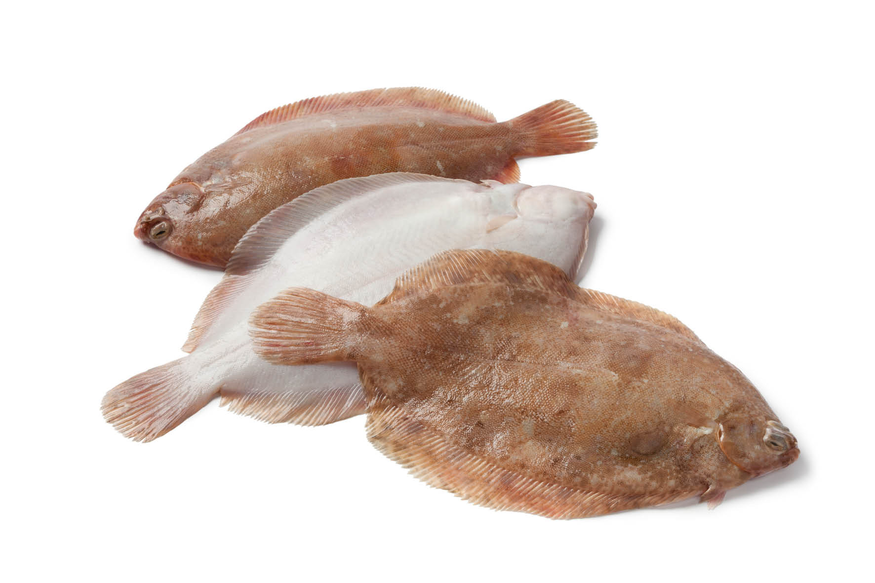 phils_plaice_north_shields_15.jpg