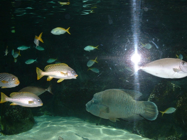 Aquarium LR.JPG