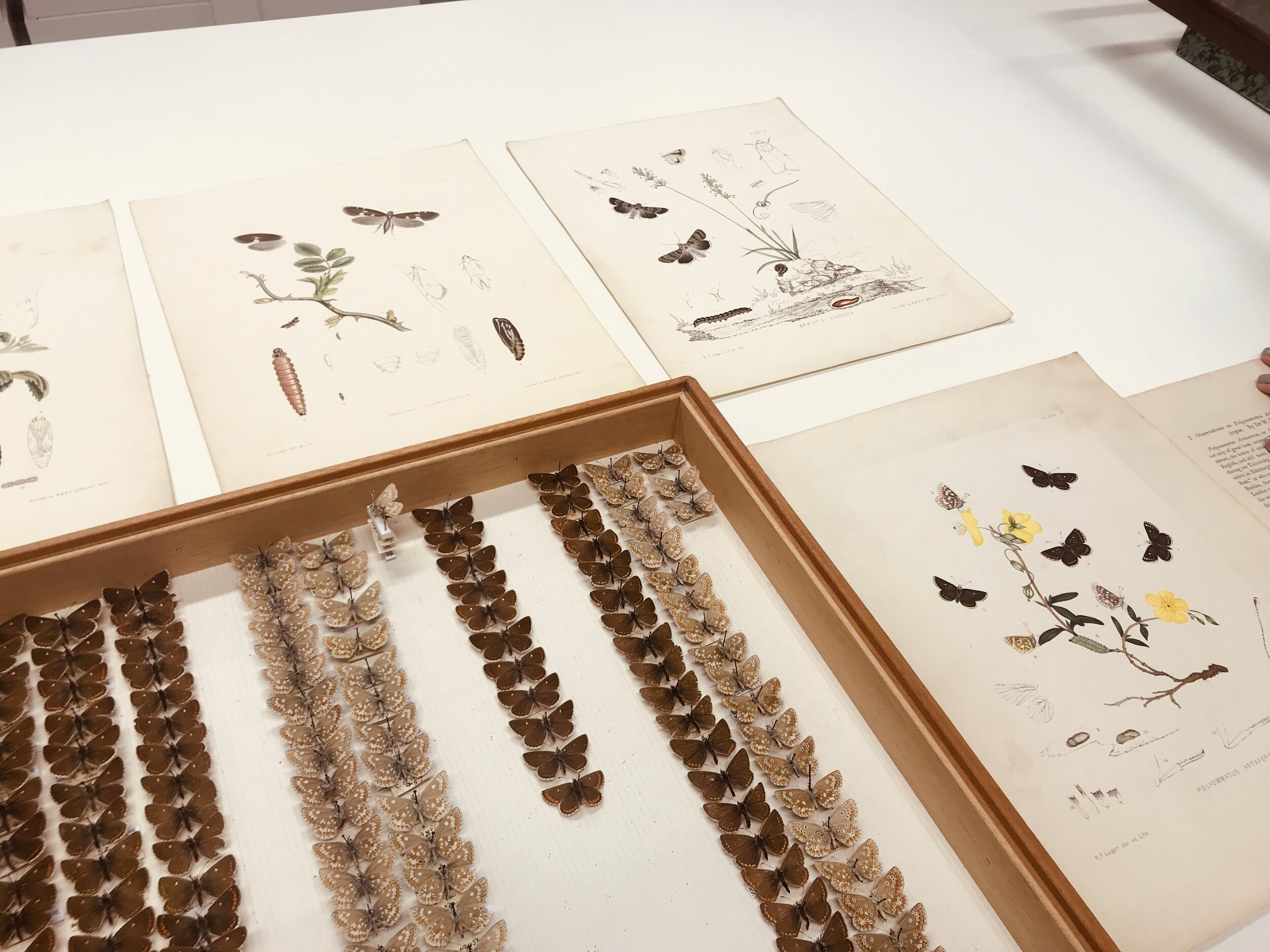 Some of Logan's pinned specimens and colour plates