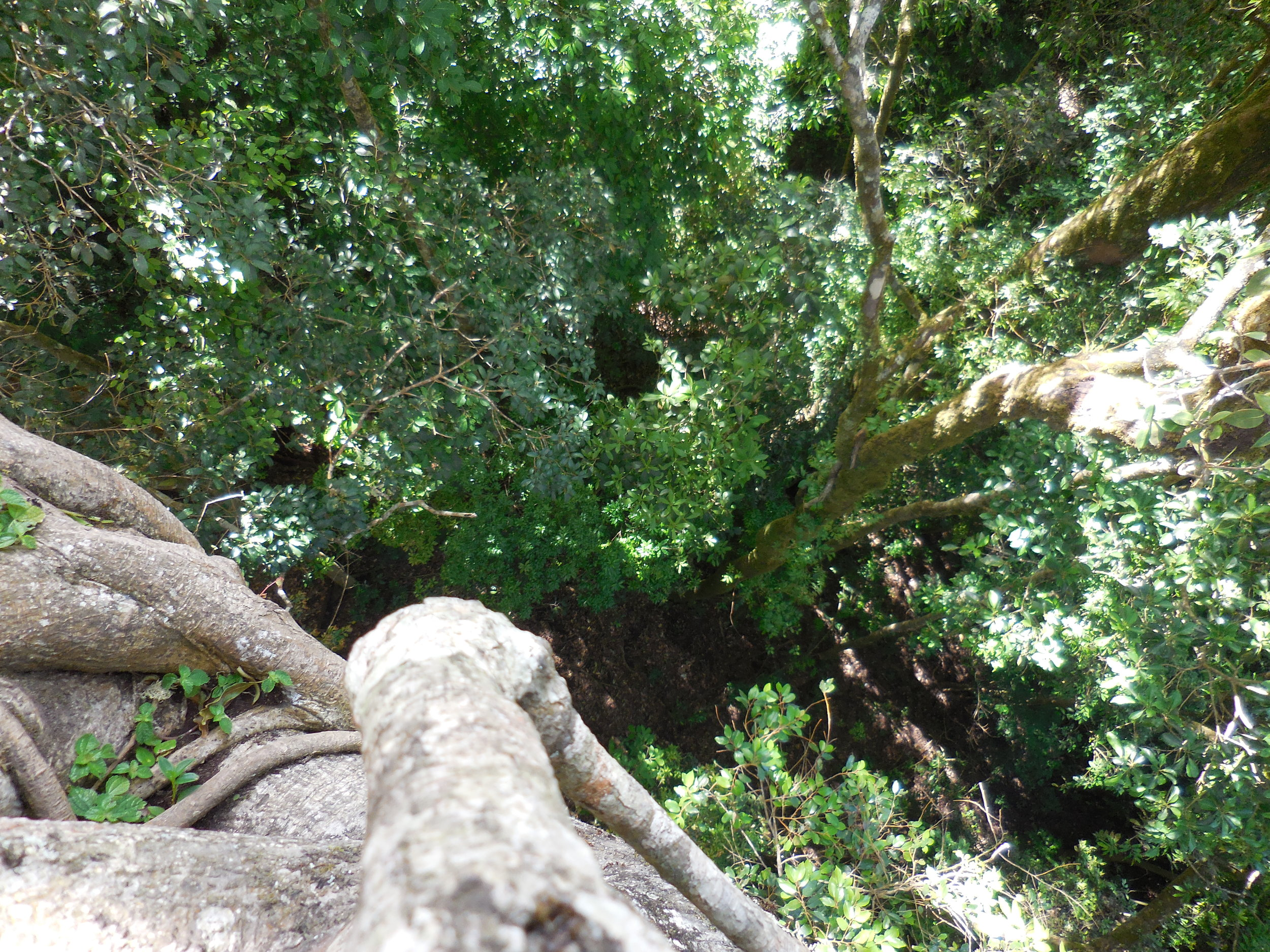 looking down the hollow tree