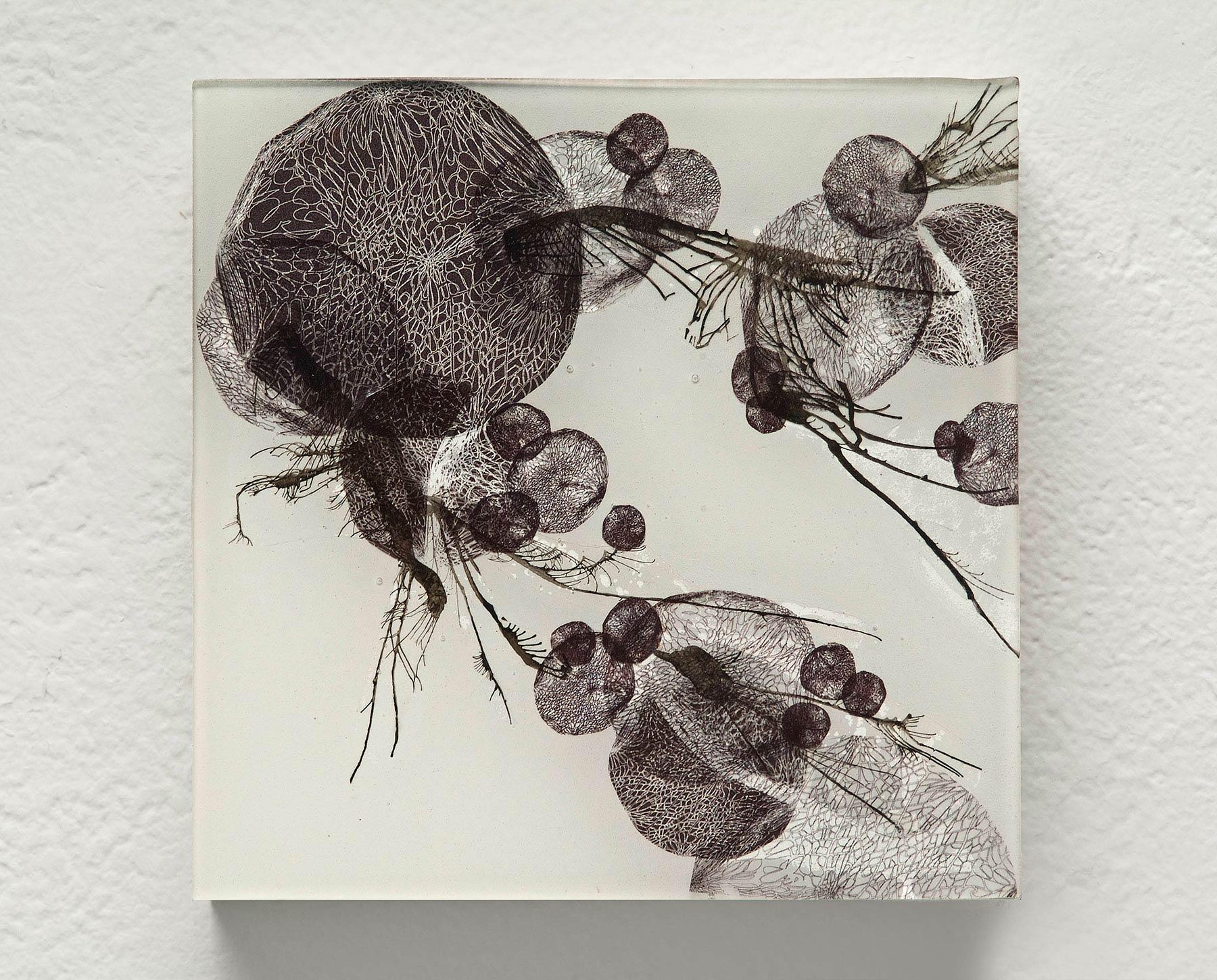 Spores (III)