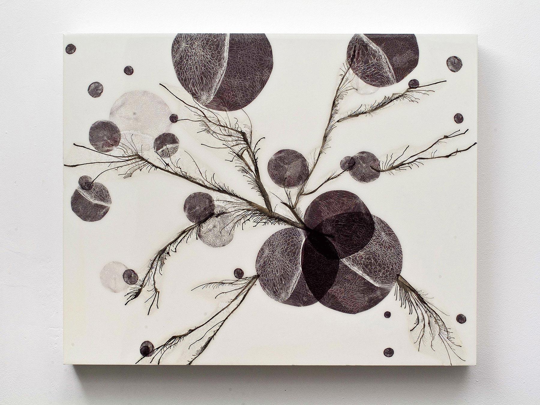 Spores (IV)
