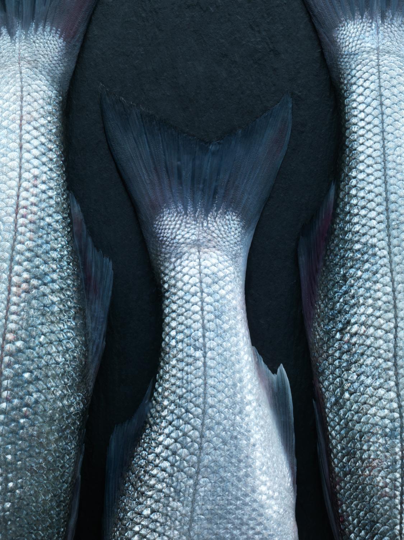 HarrodsMagazine_Feb17_FishTails - 158.jpg