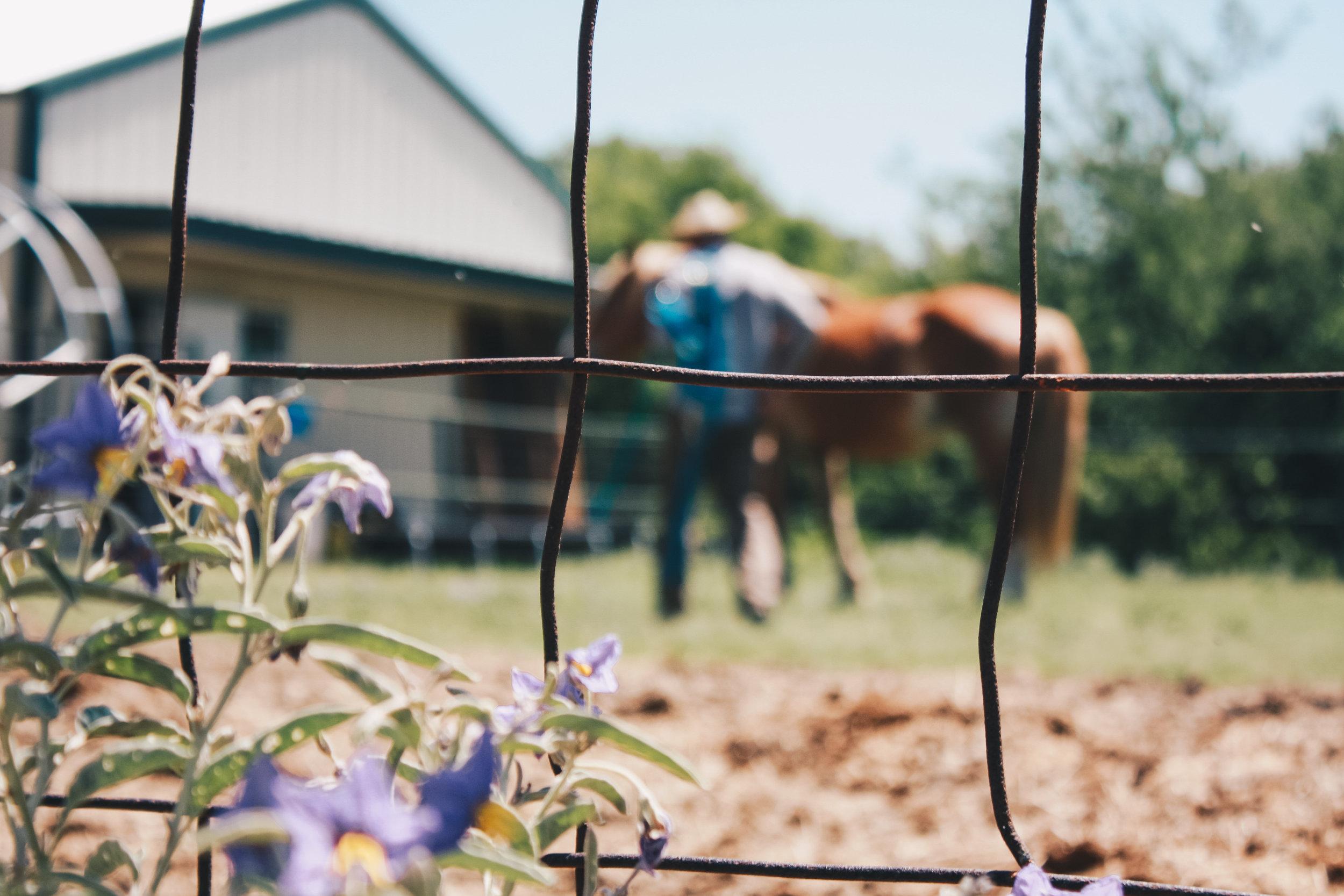 Livestock33.jpg