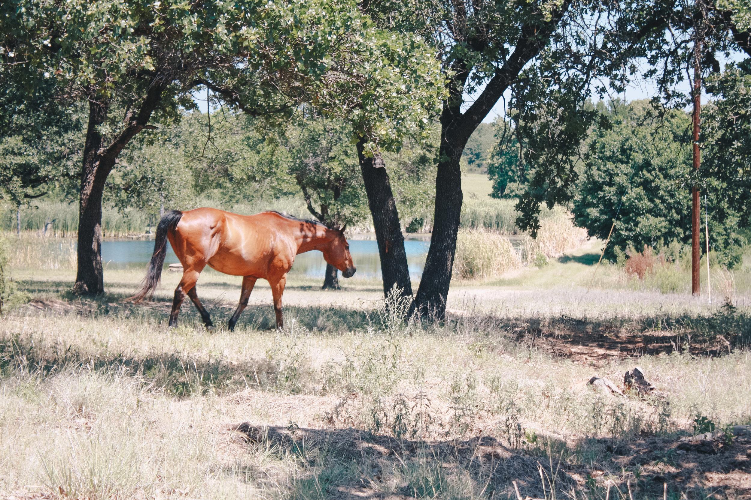 Livestock39.jpg
