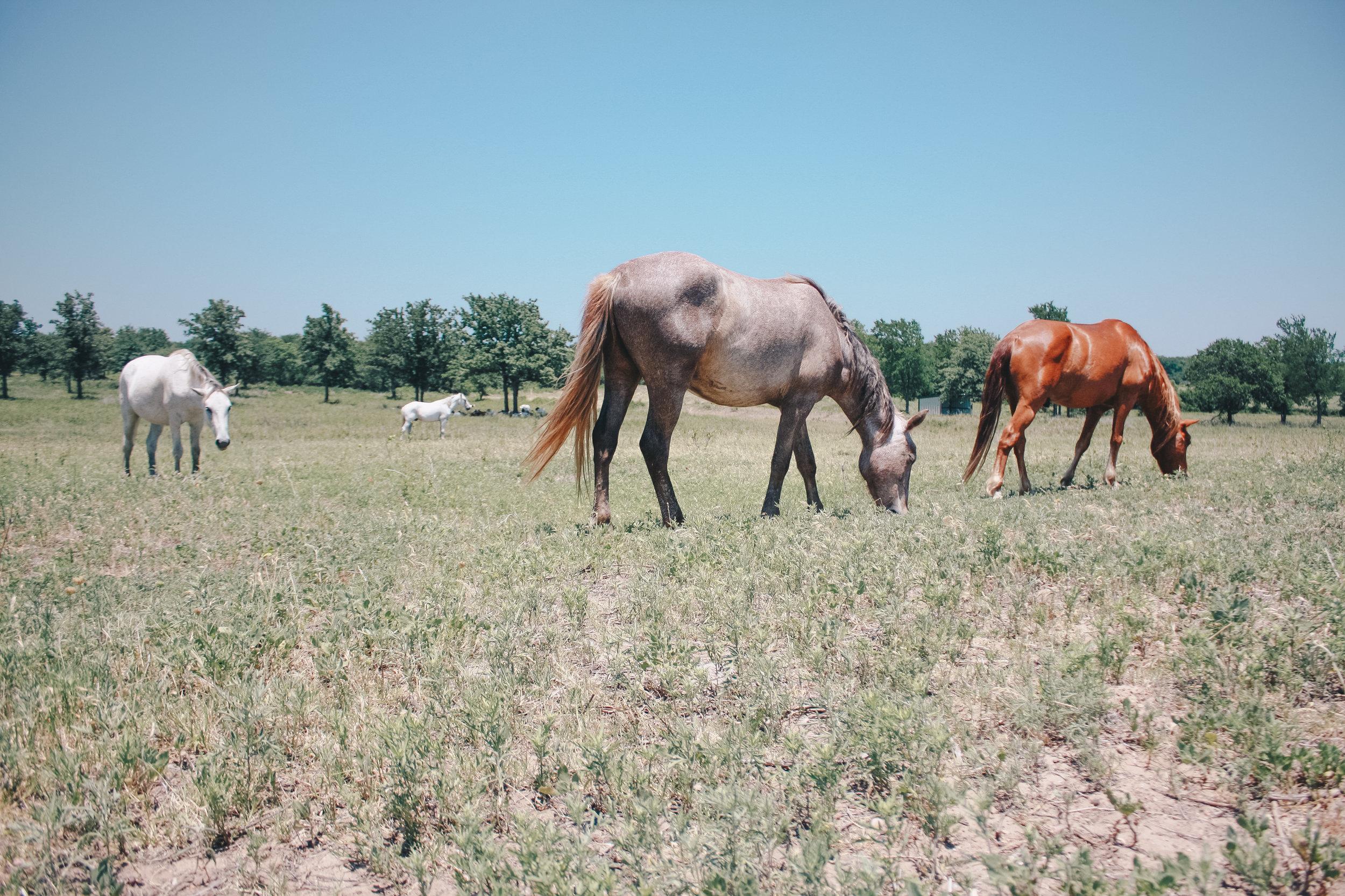 Livestock46.jpg