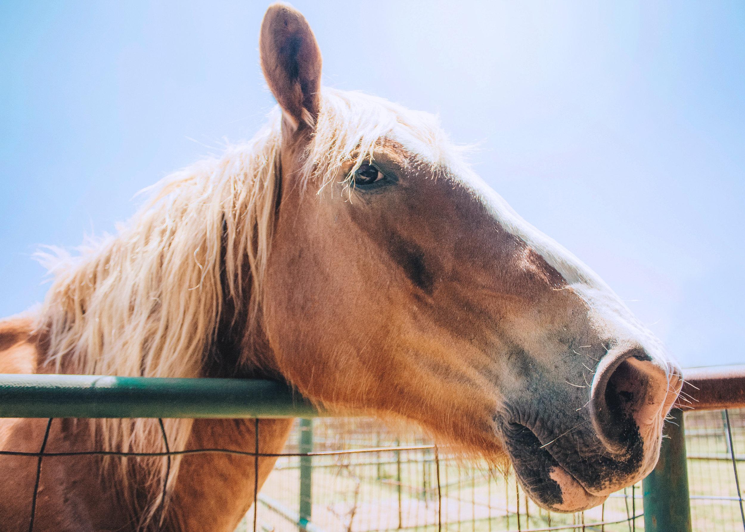 Livestock37.jpg