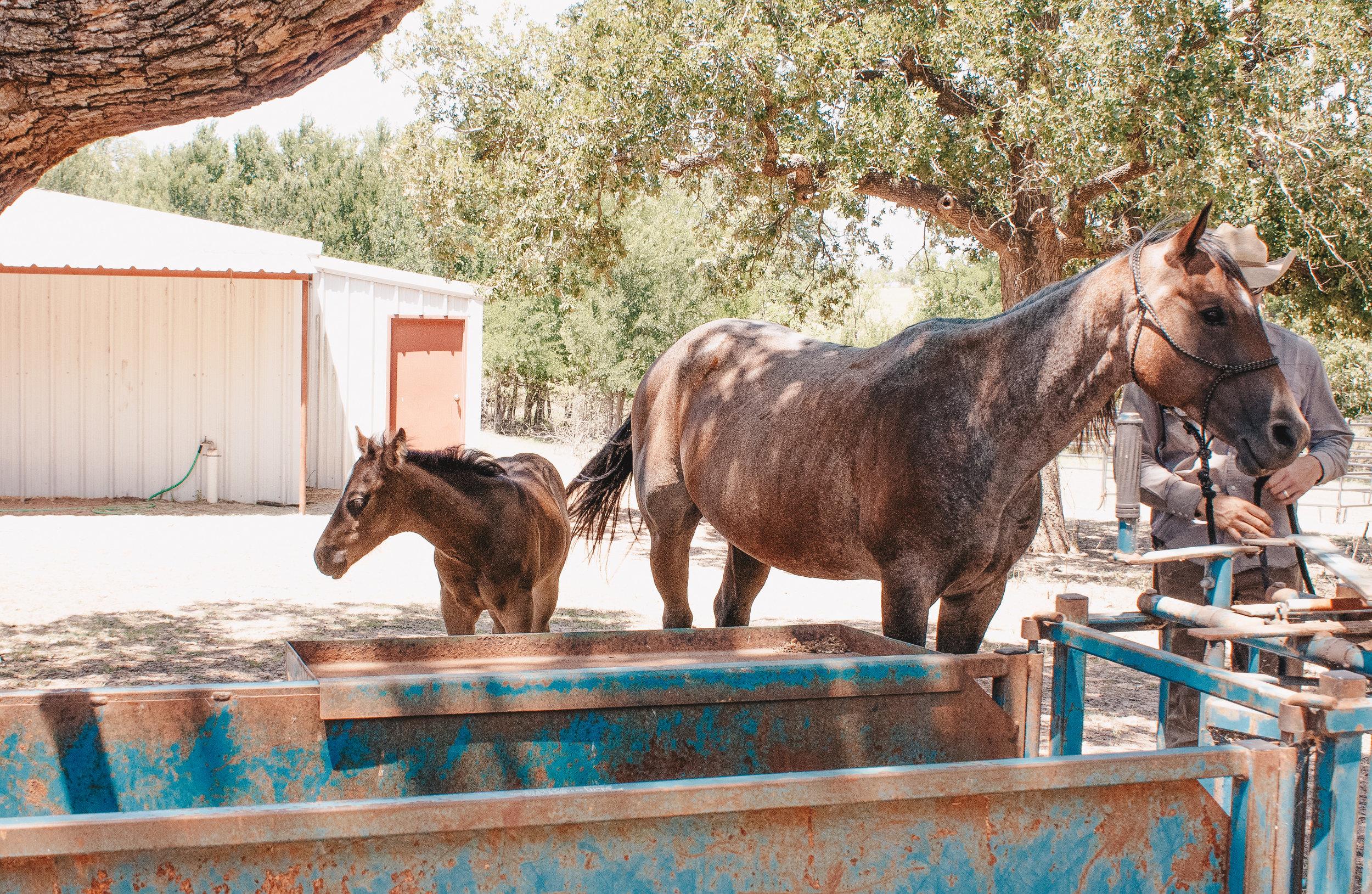 Livestock22.jpg