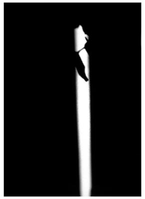 9-AbstractFlower.jpg
