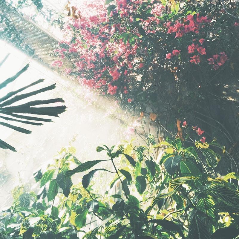 summer_dreaming.jpg